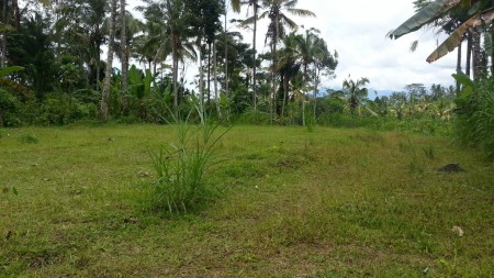 3500 sq m of Freehold Land with Mountain and Valley Views for Sale Just 25 Minutes from Ubud Center