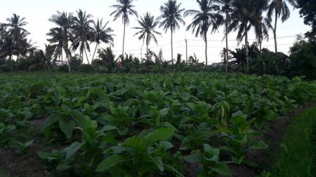 1200 Sq m of Freehold Land For Sale Close to Beach and Just 20 Minutes from Ubud Center