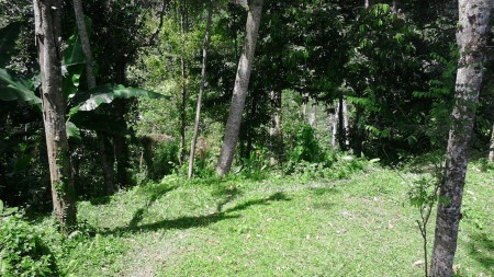 800 Sq m of Freehold Land For Sale Just 20 minute From Ubud Center
