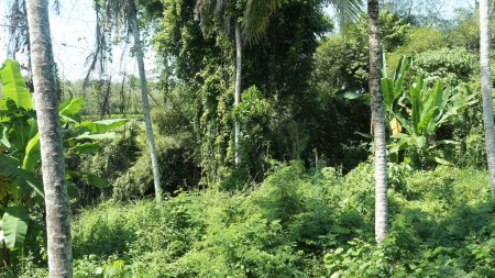 700 Sq m of Freehold Land For Sale Located at a Strategic Location just 5 Minutes from Gianyar Center (Jl, Kota Gianyar).