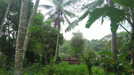 1800 Sq m of Freehold Land For Sale 15 minutes from Ubud Center