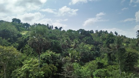 A Spacious 7280 Sq M Freehold Land with Beautiful Valley and River View For Sale just 30 Minutes from Ubud Center