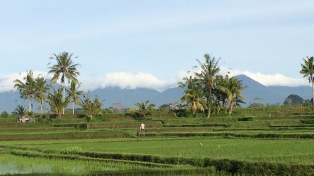 40,000 sq m Freehold Land with Amazing Views 15 Minutes from Ubud Center