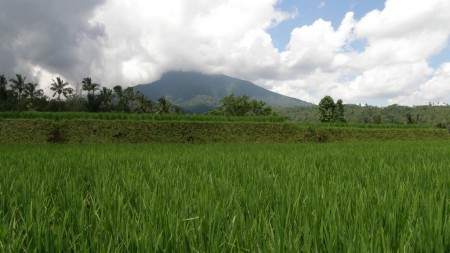 Absolute Natural Set 7450 Sqm Freehold Land in Pupuan, Tabanan