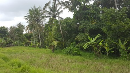 2050 sq M Freehold land with Valley and Jungle views for Sale just 5 Minutes from Ubud Central