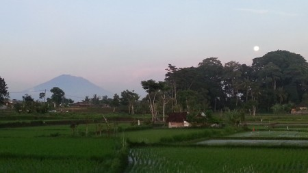 469 sq m Freehold Land with Beautiful Rice Field View 7 Minutes from Central Ubud