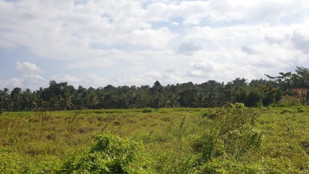 250 sq m Freehold Land with stunning Rice Field  and Jungle Views 10 Minutes from Central Ubud