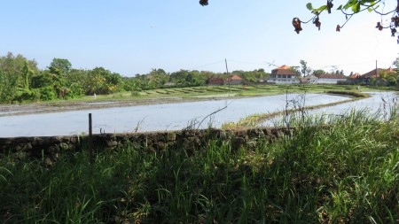 1800 Sqm Land Freehold In Tanah Lot