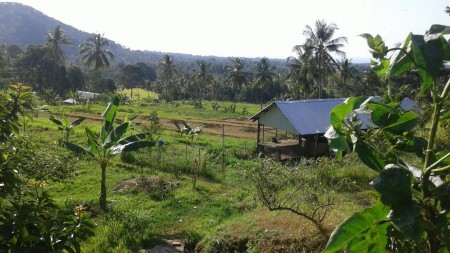 7200 Sqm Freehold Land w Sea View for Sale in the Hills Foot of Singaraja