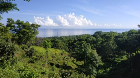 Nice Sea View 3000 Sqm Freehold Land for Sale in Singaraja