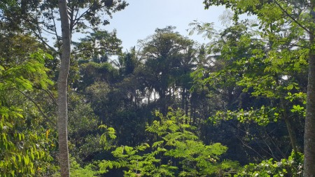 6181 sq m Freehold Land with Amazing Ravine and Jungle Views 10 Minutes from Central Ubud