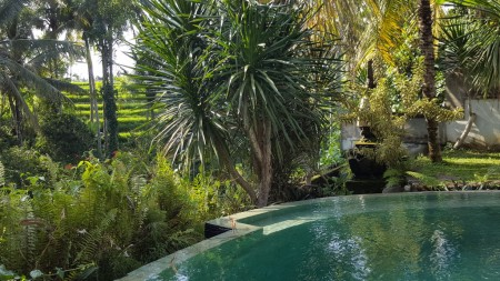2 Bedroom Villa on 313 sq m of Freehold for Sale 5 Minutes from Ubud Center