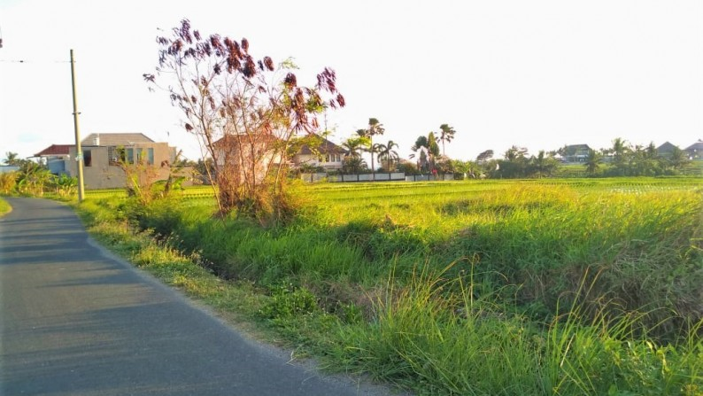 Land For Sale Only 400 Meters From The Beach With Ocean And Sawah View