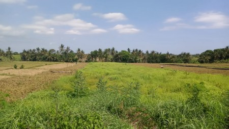 Freehold Land in Buwit Tabanan 4500 Sqm