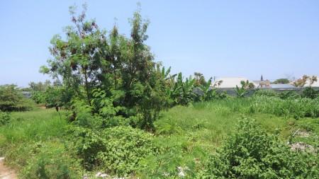 Freehold Land In Canggu Berawa Walking Distance To The Beach
