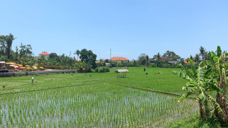 Modern Townhouses Designed In Great Location Babakan Canggu